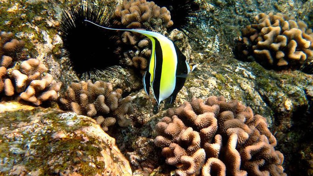 Show item 3 of 5. Striped fish in the corral reef of the pacific ocean