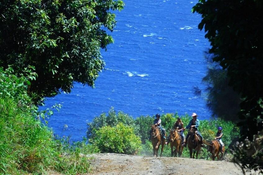 Show item 5 of 8. Oceanfront Horseback Trail Ride