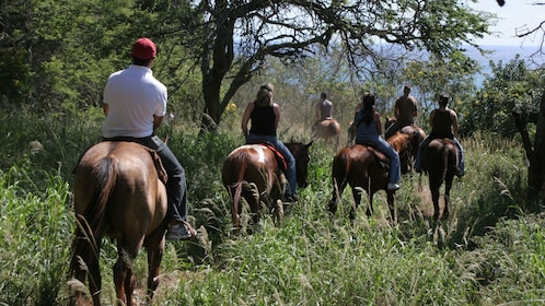 People horseback riding on a trail in Maui