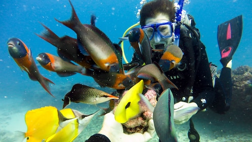 Interact with the marine wildlife by scuba diving off the coast of Oahu