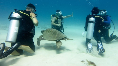 Gain your PADI scuba diving certification by diving with an instructor off the coast of Oahu