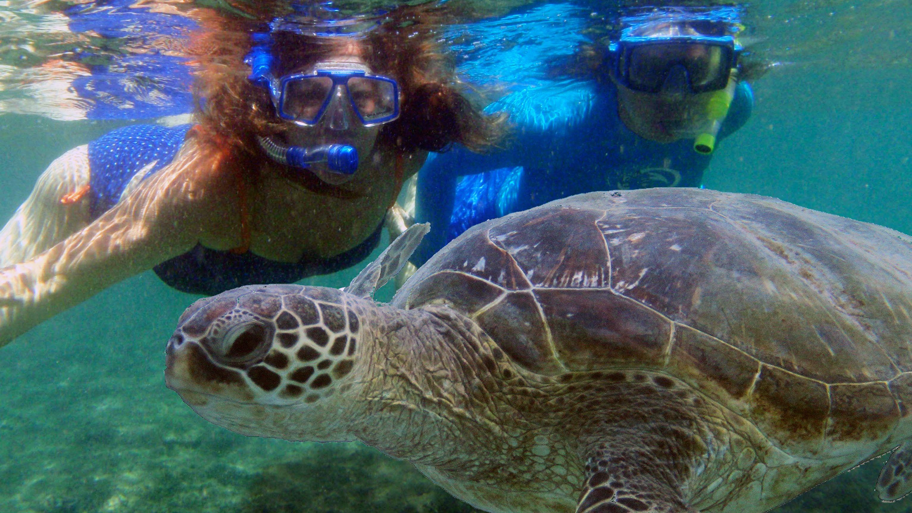 Turtle and snorkelers in Kauai
