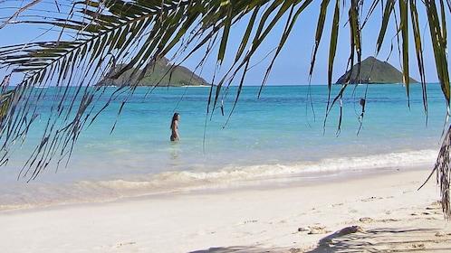 Beach view through palm trees in Kauai