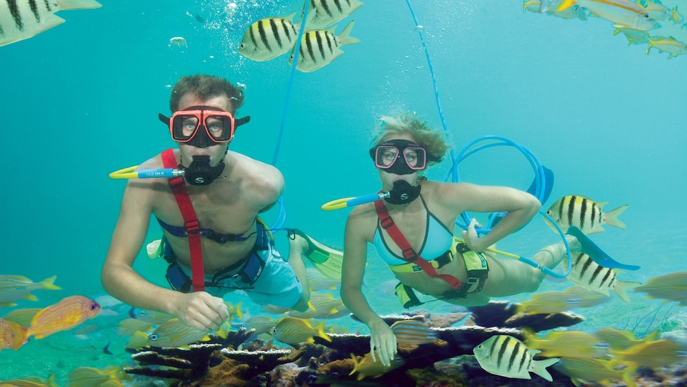 Couple snorkeling with snuba tubes on Oahu