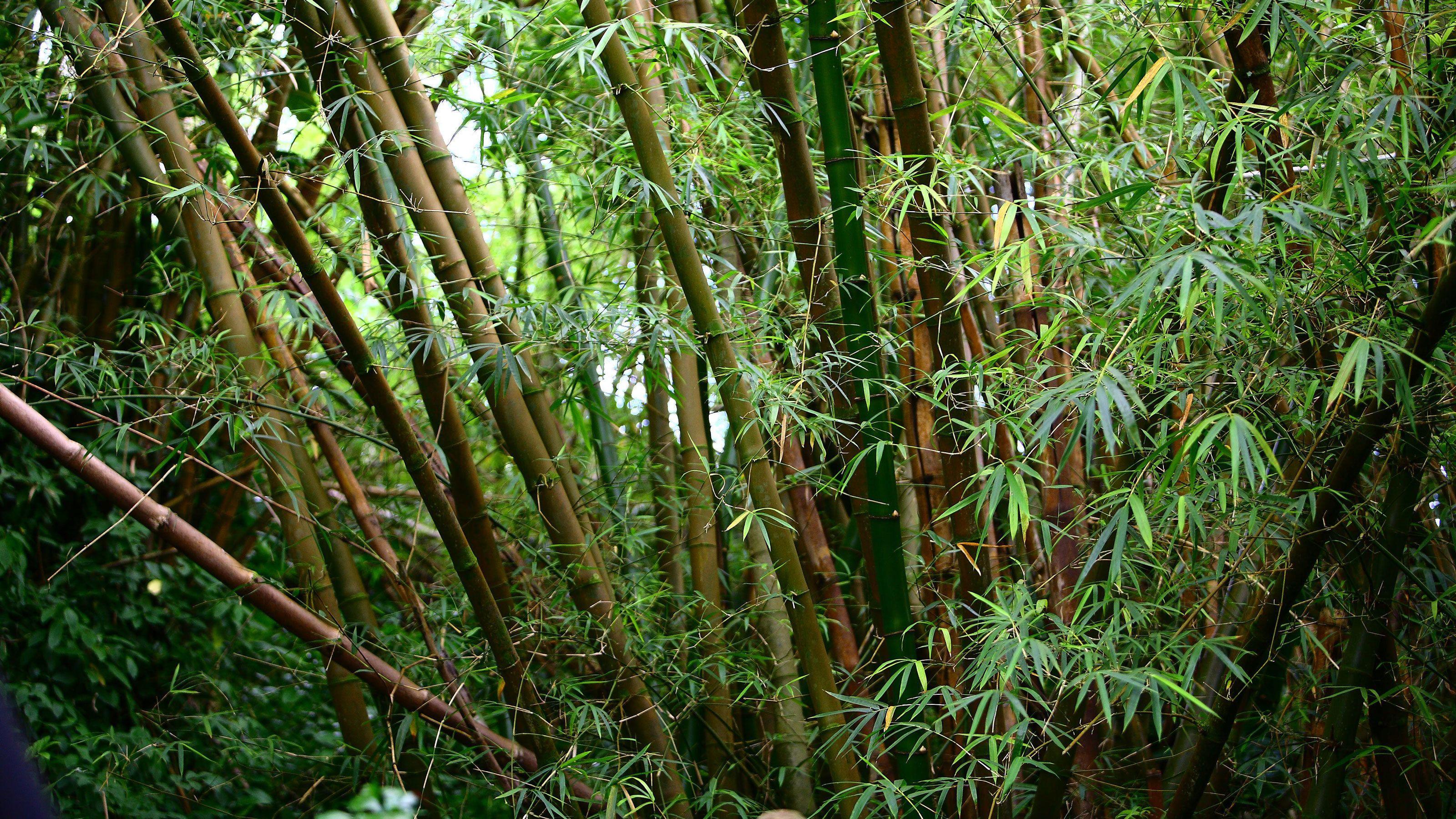 Beautiful view of the jungle in Kauai