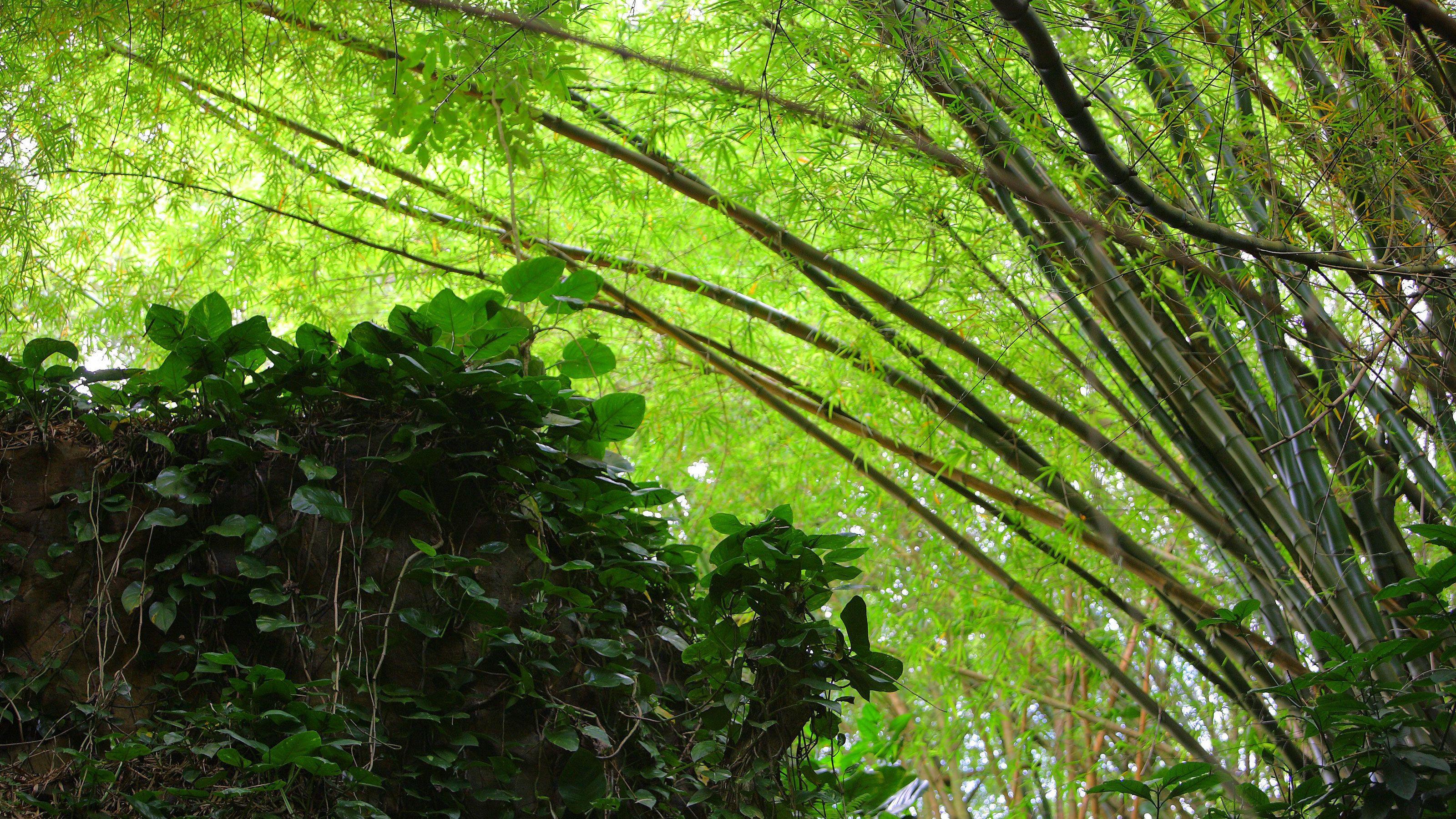 Fresh view of the jungle in Kauai