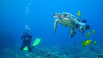 Kohala Coast Two-Tank Boat Dive