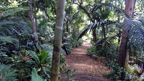Forest path in Kauai