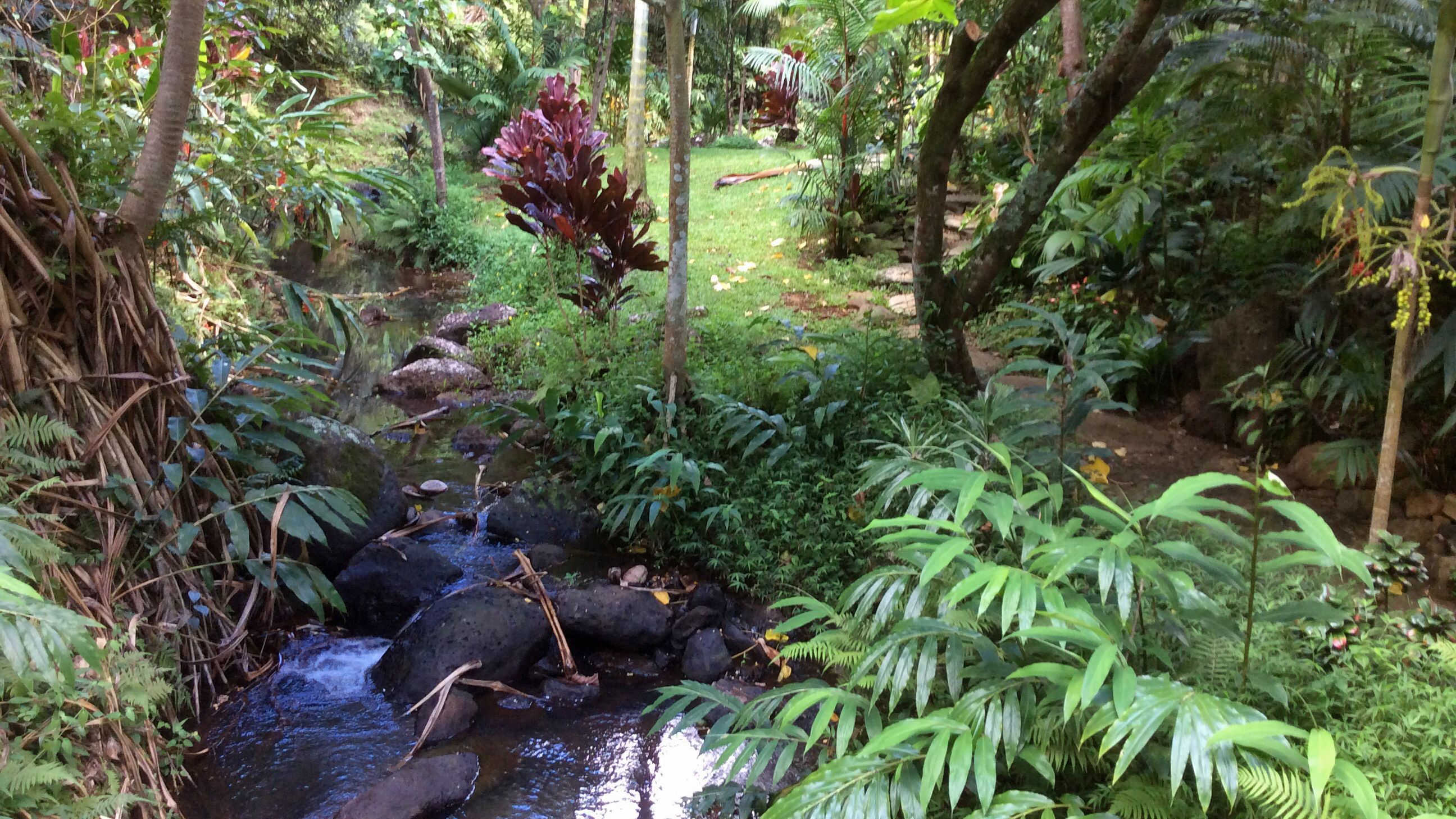 Stream in the forest in Kauai