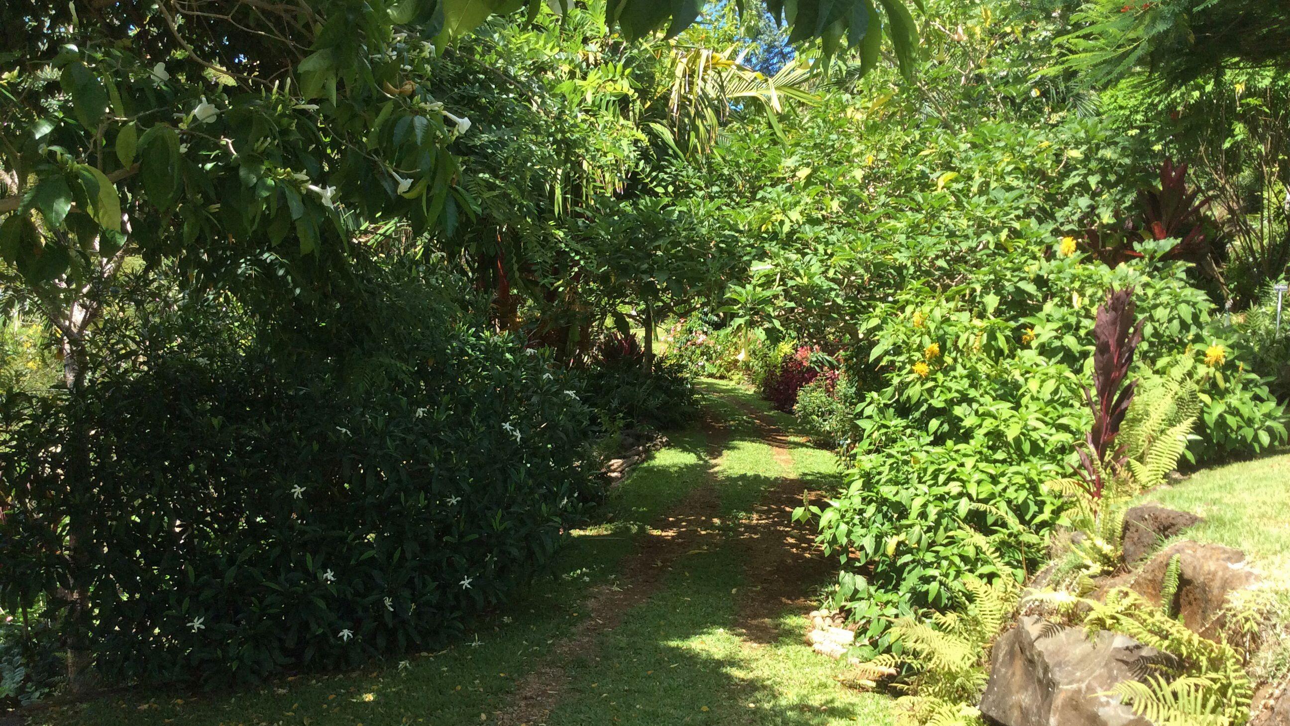 Garden path in Kauai