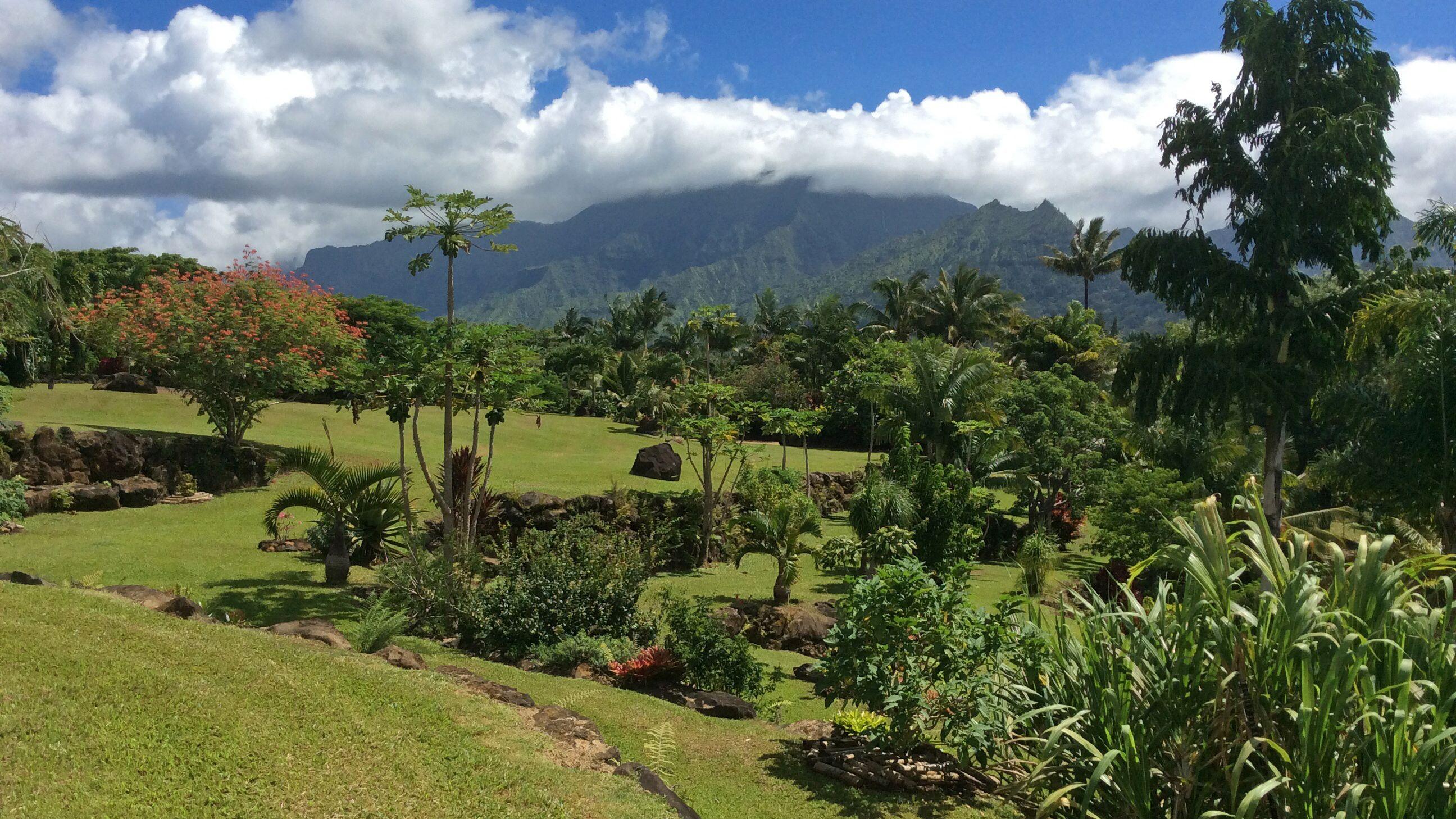 Garden view in Kauai