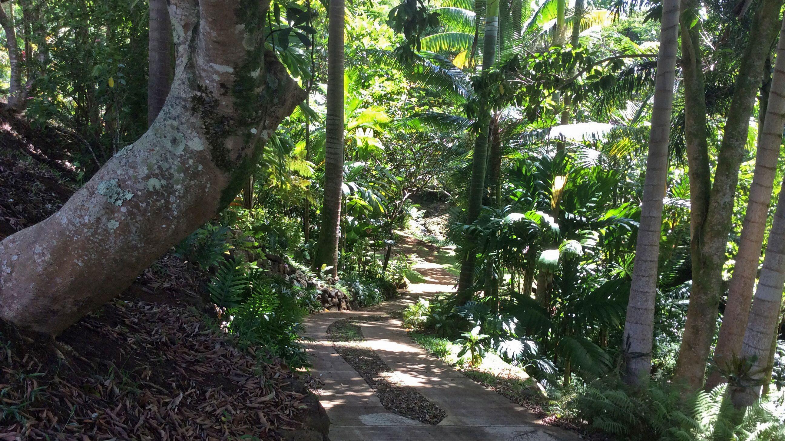 Forest scene in Kauai