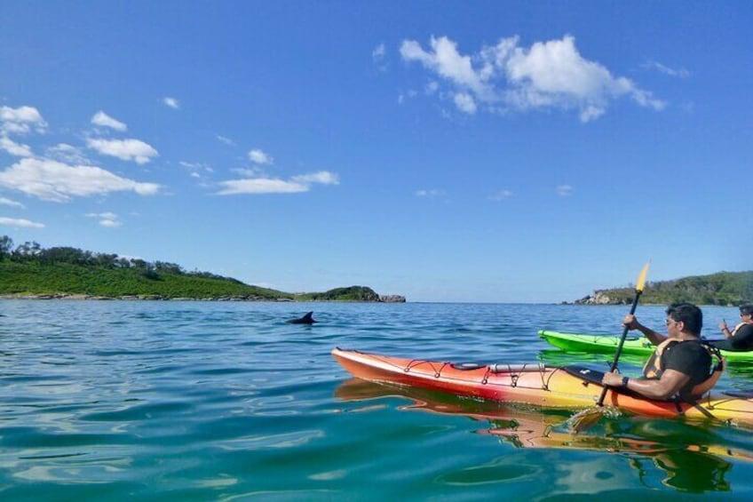 Dolphin at Bowen Island