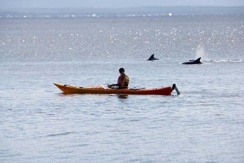 Dolphins while paddling