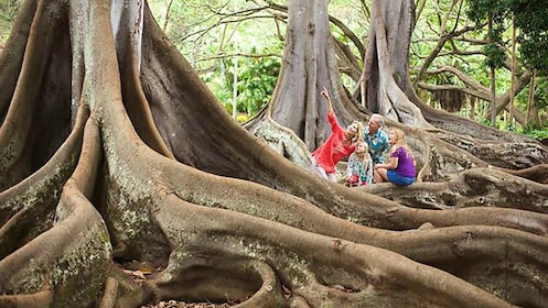 large tree roots in kauai