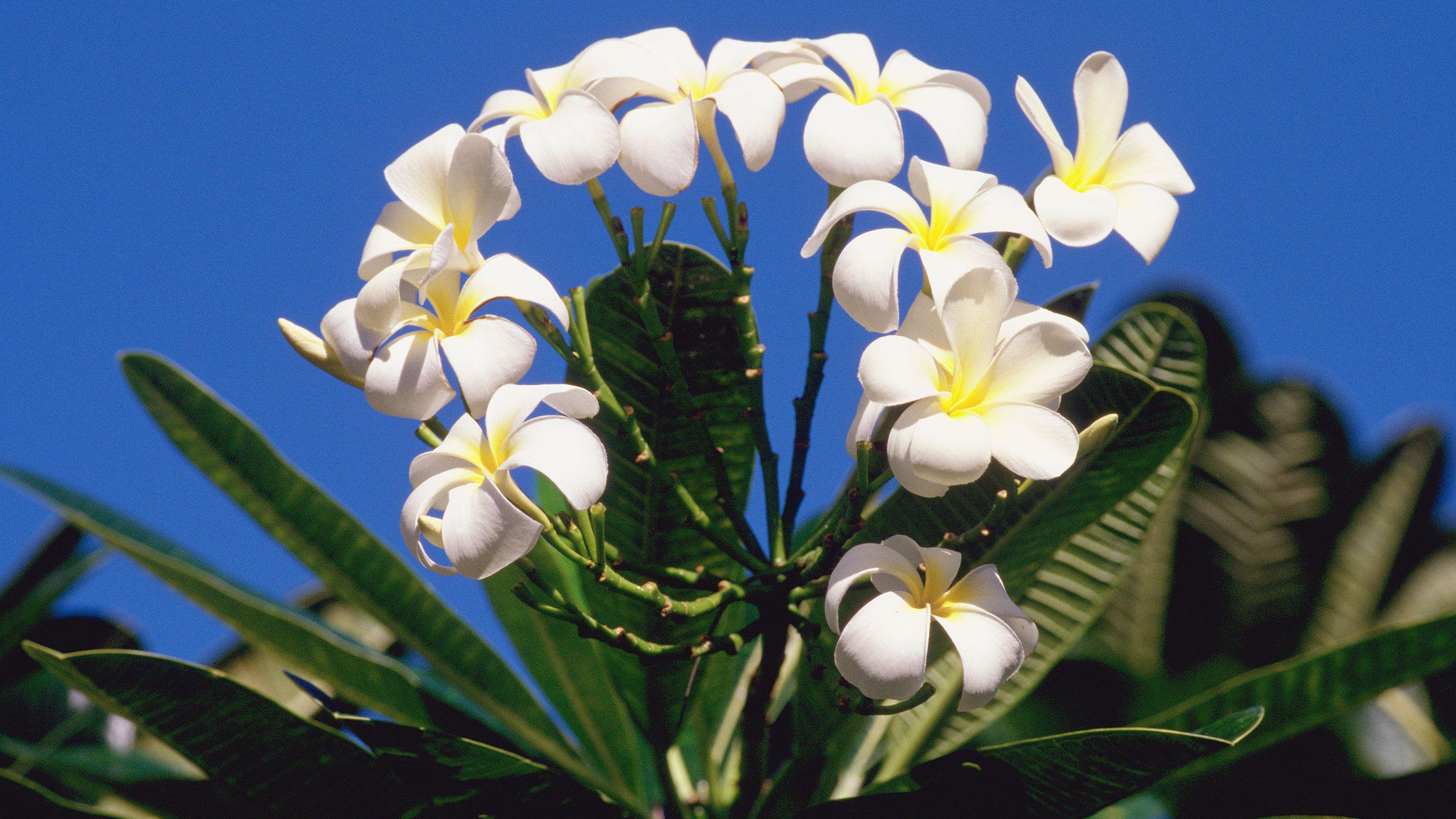 tropical plant at Guided Garden Tour in Kauai