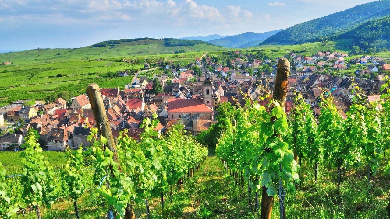 Beautiful landscape view of vineyard.