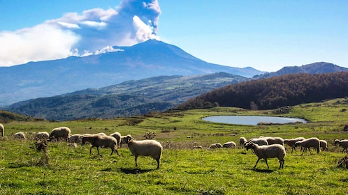 Landscape view with sheep in mountains.