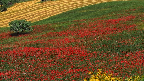 Landscape view of area with several red flowers.