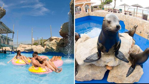Split image of people on a lazy river inner tube ride and a group of sea lions on a rock