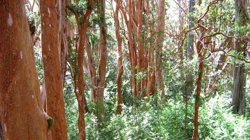 Forest in San Carlos de Bariloche