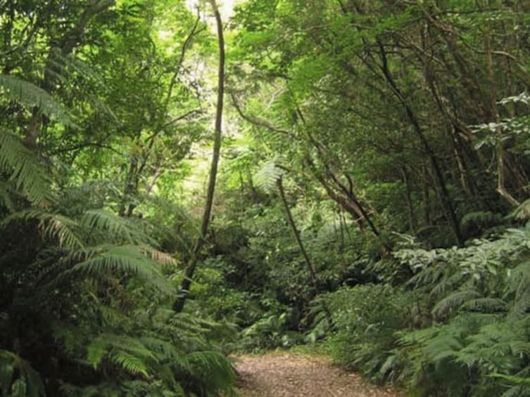 Forest Therapy Experience in Kunigami Village, Okinawa
