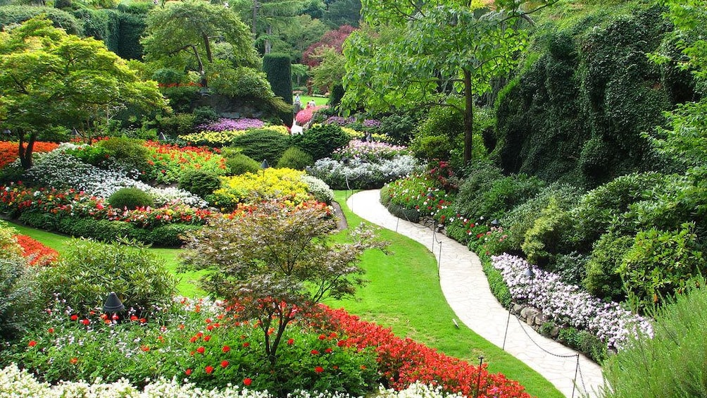 Show item 3 of 4. Path weaving through the vibrant grounds of Butchart Gardens in Victoria
