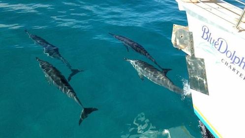 Dolphins near boat in Kauai