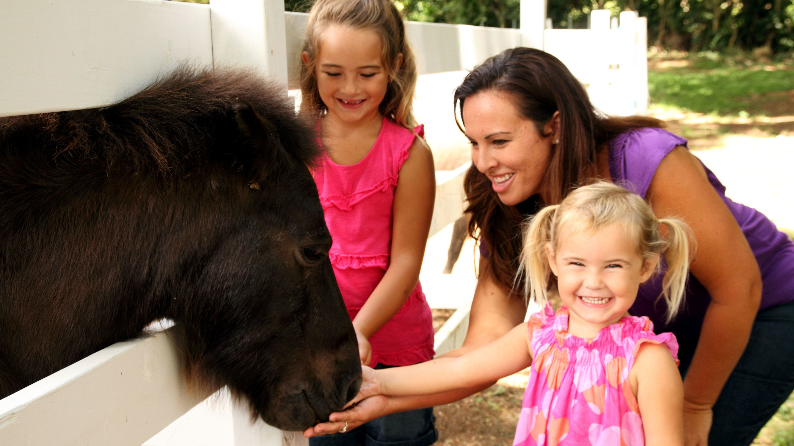 3 girls feeding pony