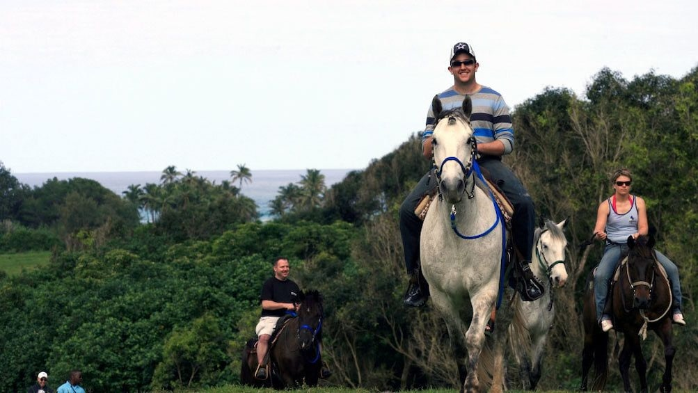 Show item 5 of 6. Horses with riders on trail