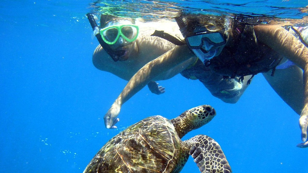Show item 4 of 7. Snorkelers near a sea turtle underwater in Maui