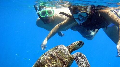 Snorkelers near a sea turtle underwater in Maui