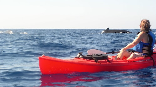Woman kayaking and whale surfacing near her in Maui