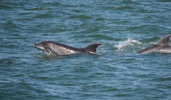 "Dolphin Sightseeing Trip on the ""Footloose"" Catamaran"
