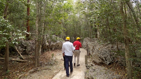 Two men walking down the plank jungle path to the Green Grotto in Jamaica