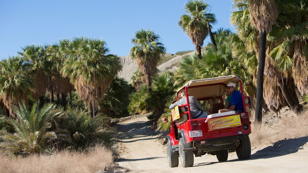 Show item 2 of 5. Jeep with tour group on a dirt road lined with palm trees