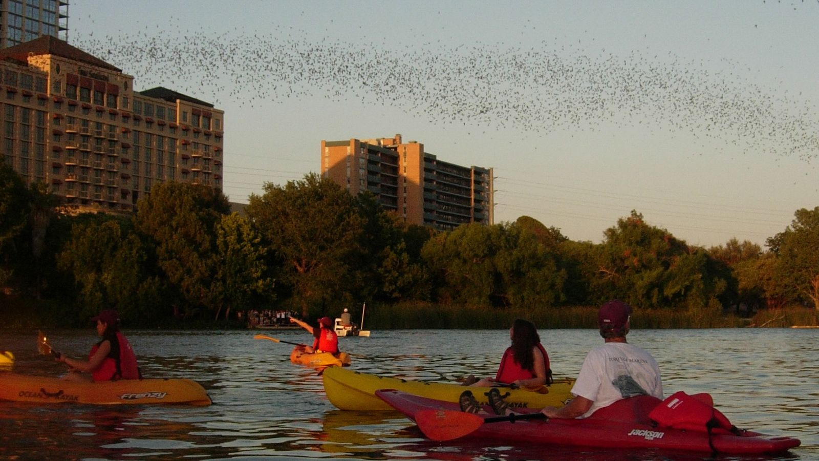 Evening Bat-Watching Kayak Tour to Congress Avenue Bridge