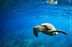 Aventure en sous-marin Waikiki Atlantis