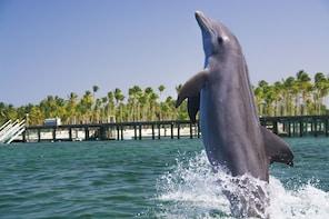 PROMOÇÃO: mergulho e interação com golfinhos em Punta Cana
