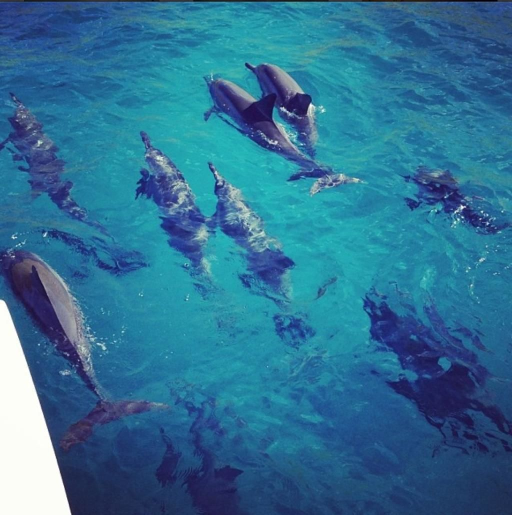 dolphins next to boat.jpg