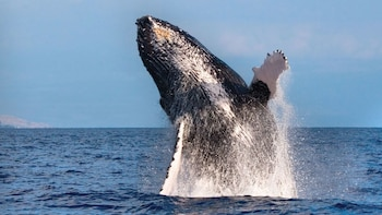 Waikiki Coast Whale-Watching Cruise