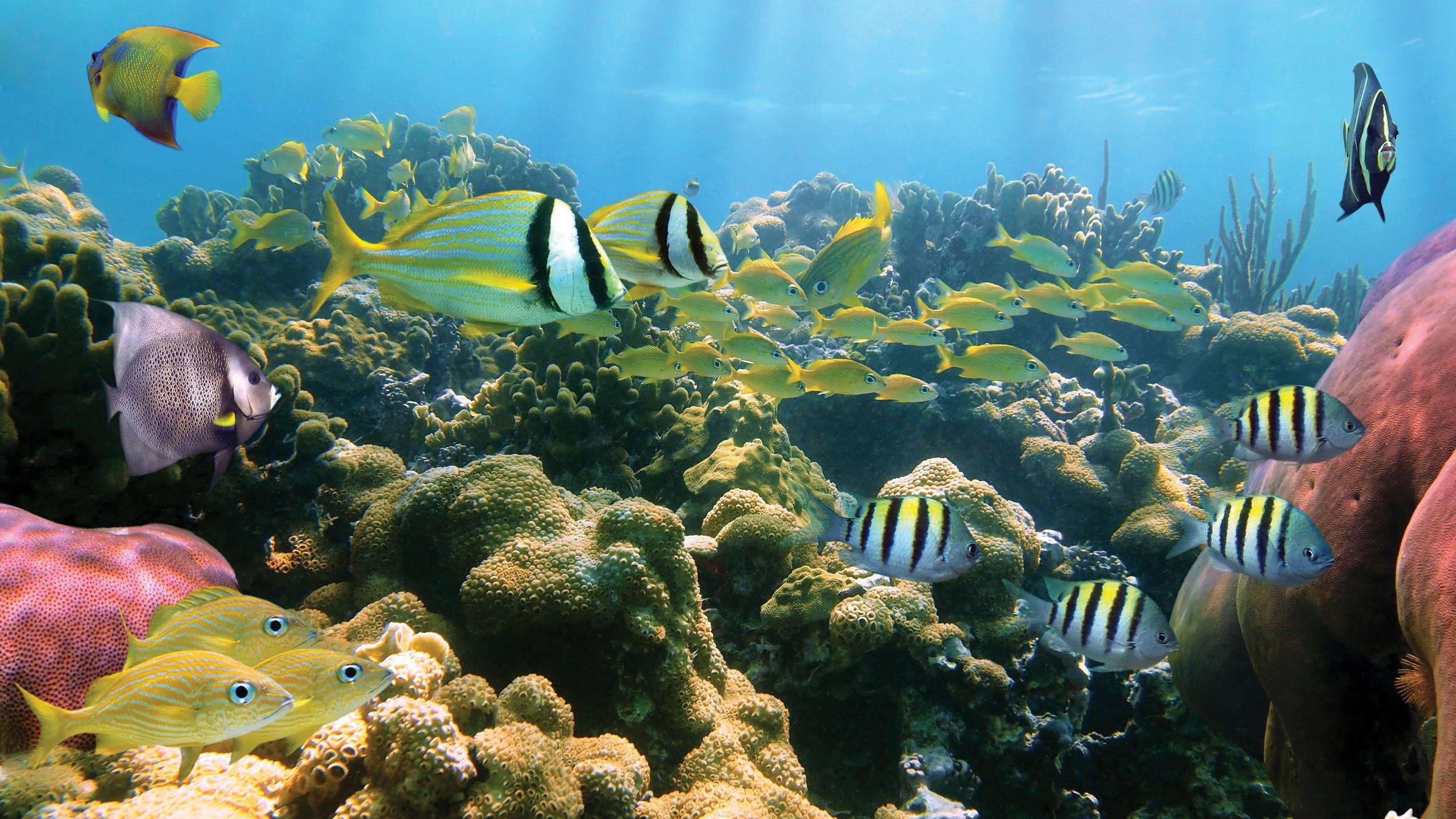 West Oahu Ultimate Scuba Diving