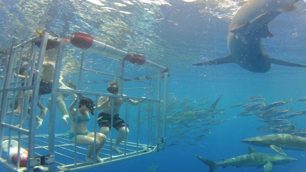 Swim with Sharks North Shore Adventure