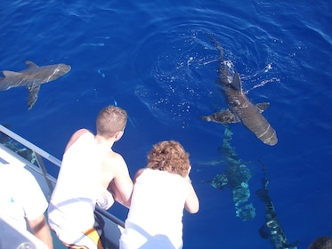 Swim with Sharks North Shore Adventure