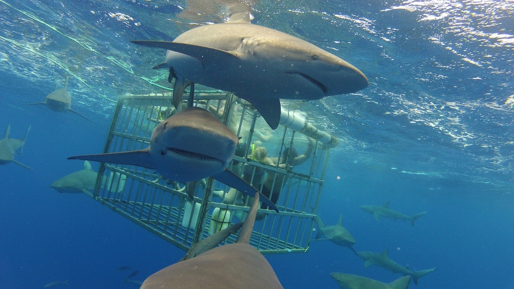 Show item 1 of 10. Swim with Sharks North Shore Adventure