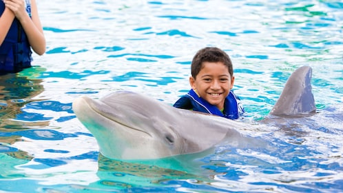 Child swims with a dolphin in the Sea Life Park
