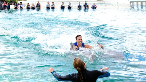 Interact with dolphins at the Sea Life Park