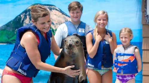 Woman pets sea lion at the Sea Life Park in Oahu