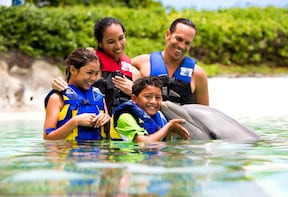 Shallow Water Dolphin Encounter