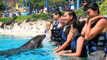 Delfiinien kohtaaminen matalassa vedessä